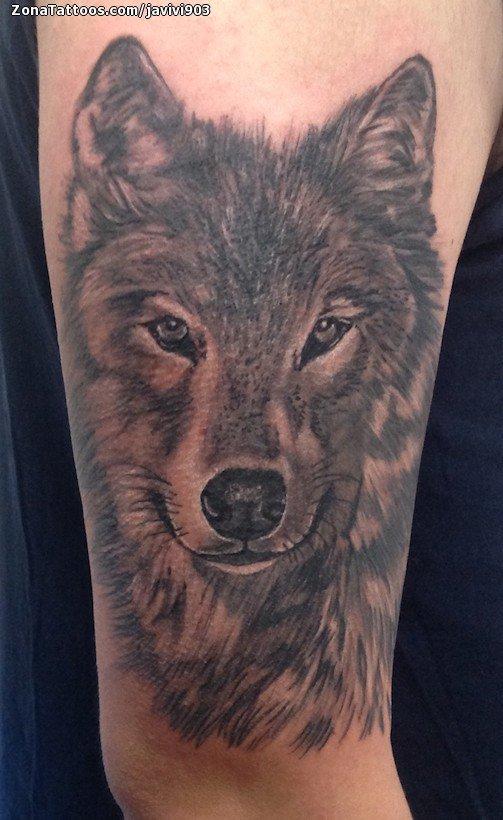 Tatuaje De Lobos Animales Brazo