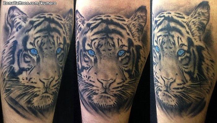 Tatuaje De Animales Tigres