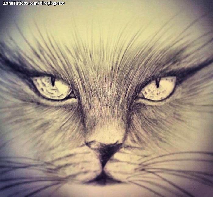 Diseño De Gatos Animales